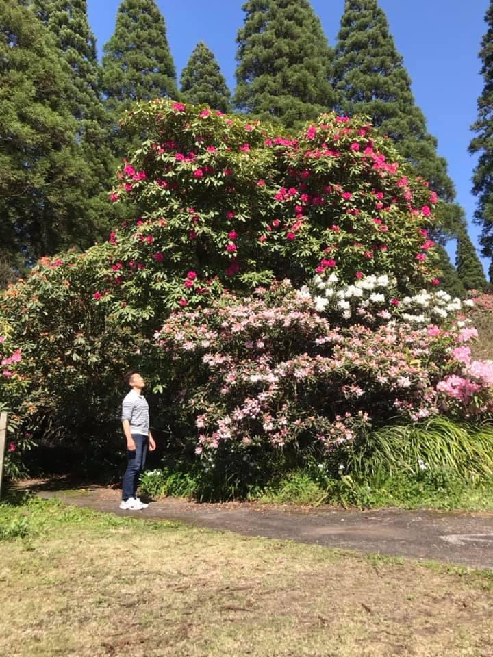 4月7日のしゃくなげの森開花情報