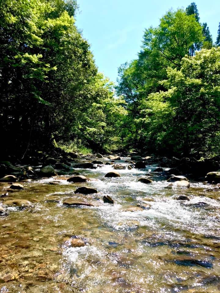 しゃくなげの森の渓流