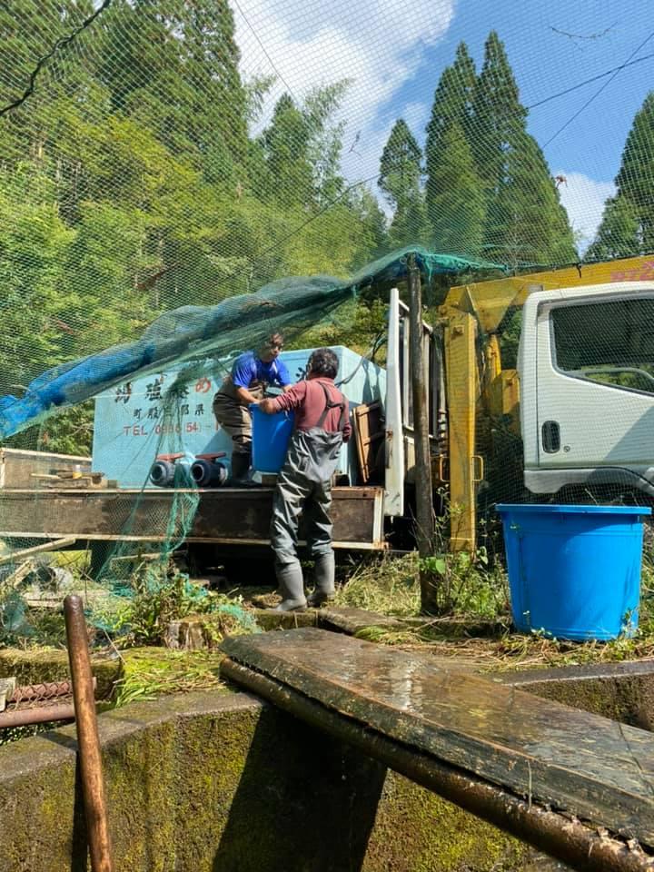 連日尺ヤマメの池移動