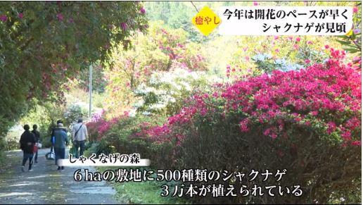 UMKテレビ宮崎のニュースで紹介されました